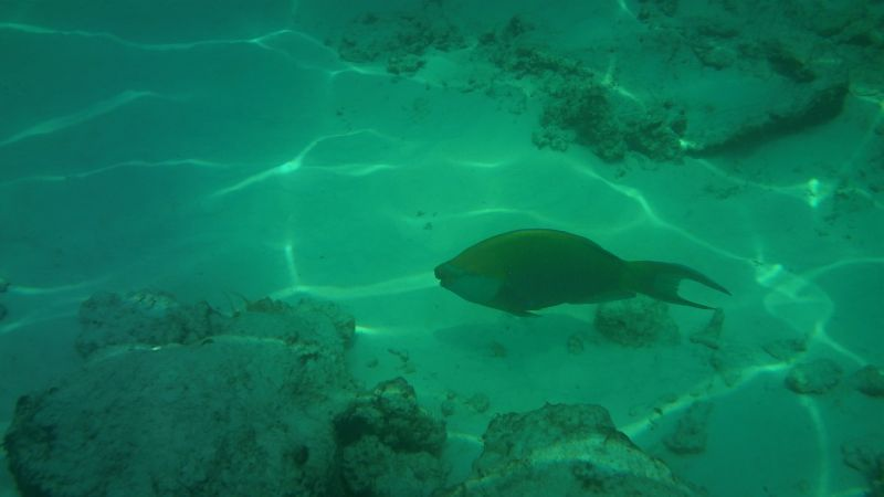 Similan Island 19