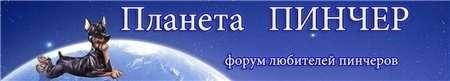 http://pinscher-planet.ru/portal.php